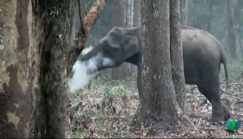 See Pic Puzzling picture of wild elephant breathing out smoke turns into a web sensation!
