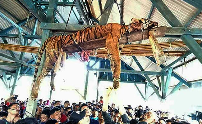 Villagers Thought They Killed A Supernatural Shape-Shifter. It Was An Endangered Sumatran Tiger.