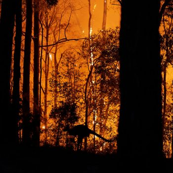 A kangaroo escapes the fire as the fire front approaches a property in Colo Heights, Australia on Nov. 15, 2019.