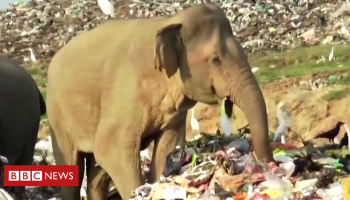 Sri Lanka digs trench to keep elephants away from rubbish dump
