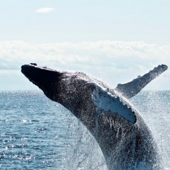 If Whales Move the Market, UniWhales Is the Whale Whisperer - CoinDesk