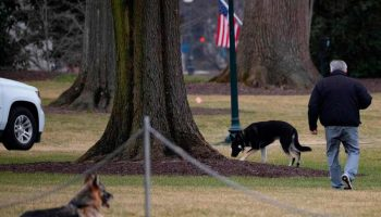 Biden's dogs leave White House, sent home to Delaware after 'biting' incident: Report