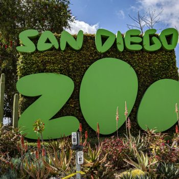 Father accused of bringing, dropping child in San Diego Zoo's elephant habitat
