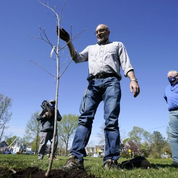 Cedar Rapids tries to turn city of stumps into tree oasis