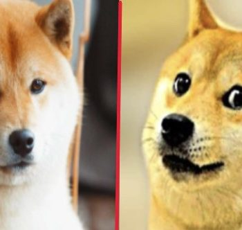 Shibacoin token it call Doge killer what and why