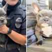 Stolen French bulldog reunited with owner after armed robbery in Culver City