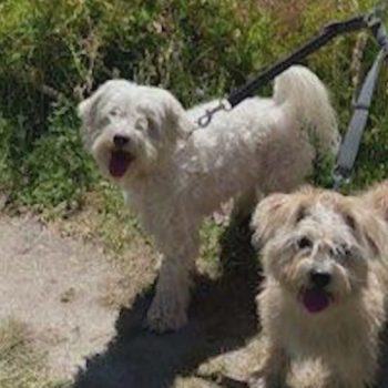 Diamond Bar man recounts fighting off terrifying bee swarm that killed 2 family dogs